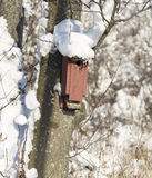 Red Birdhouse Covered in Snow Stock Images