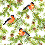 Red birds, branches of pine tree, cones. Seamless pattern. Watercolor Stock Images