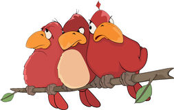 Red birds. Cartoon. The company of red birds sitting on a branch Royalty Free Stock Images