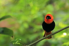 Red bishop Royalty Free Stock Photos