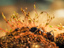 Red and black Ant was fighting on the leaves, Ant royalty free stock photos
