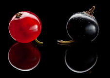 Red and black berry Royalty Free Stock Image