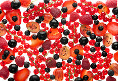 Red and black berry Stock Image