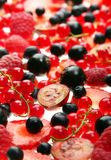 Red and black berry Royalty Free Stock Images