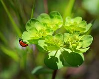 Red and Black Bug on Green Leaved Plant Stock Photo