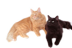Red and black cat friends. Close-up Stock Photos