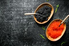 Red and black caviar in bowls with spoons and dill. On black rustic background stock image