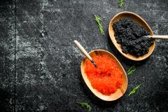 Red and black caviar in bowls with spoons and dill. On black rustic background stock images