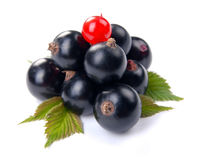 Red and black currant Royalty Free Stock Photography