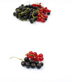 Red and black currant Stock Image