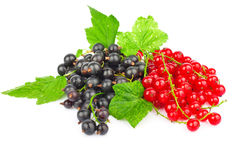 Red and black currant. Fresh red and black currant with green leaves on white background stock photos