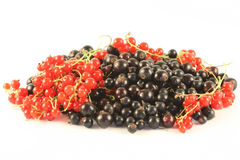 Red and black currant. Stock Images