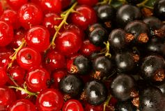 Red and black currant. Detail fruit Stock Photo