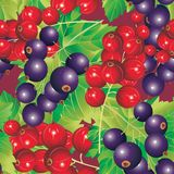 Red and Black-currant royalty free illustration