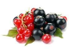 Red and black currant. On a white background Royalty Free Stock Images