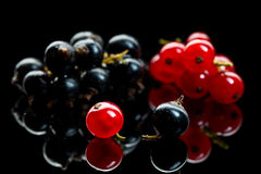 Red and black currant berry Royalty Free Stock Photo