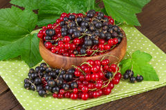 Red and Black Currant Berry Stock Photo