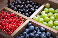 Red black currant blueberry gooseberry in a wooden box stock images