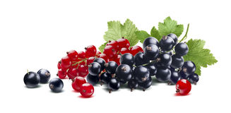 Red black currant branches composition isolated on white backgro Stock Photo