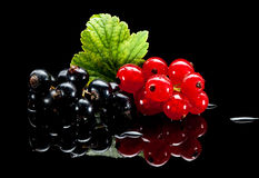 Red and black currant bunches on black Royalty Free Stock Photography