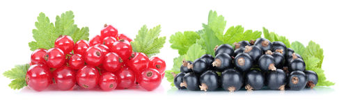 Red and black currant currants berries fresh fruits fruit isolat Royalty Free Stock Photography