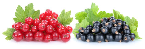 Red and black currant currants berries fresh fruits fruit isolat Stock Images