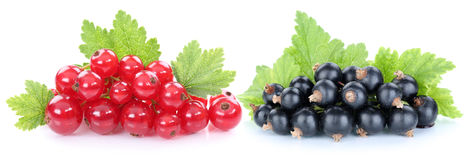 Red and black currant currants berries fruits fruit isolated Stock Images