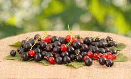 Red and black currant on linen tablecloth Royalty Free Stock Images