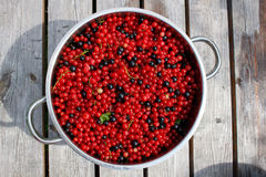 Red and black currant in pot Royalty Free Stock Photo