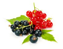 Red and black currant. On a white background Stock Photo
