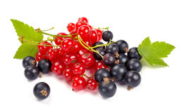 Red and black currant. On a white background Stock Image