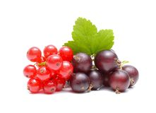 Red and black currant. On white background Royalty Free Stock Image