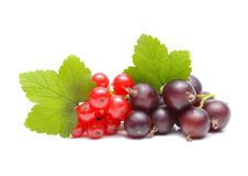 Red and black currant. On white background Stock Images