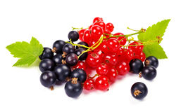Red and black currant. On a white background Stock Photos