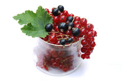 Red and black currants Royalty Free Stock Images