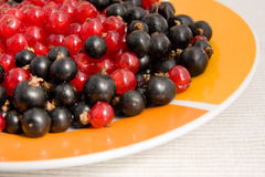 Red and black currants Royalty Free Stock Photo