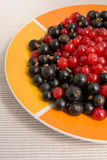 Red and black currants Stock Image