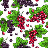 Red and black currants Stock Photography