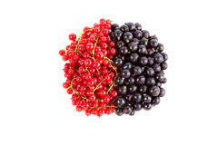 Red and black currants. Isolated on white background Royalty Free Stock Photos
