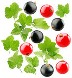 Red and black currants isolated on the white background Stock Photos