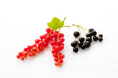 Red and black currants Royalty Free Stock Photography