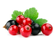 Red and black currants with leaf i Royalty Free Stock Image