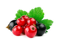 Red and black currants with leaf i Royalty Free Stock Photography