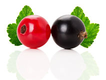 Red and black currants with leaves isolated on the white backgro Stock Image