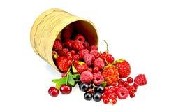 Berries different in a birch tueski Stock Photo