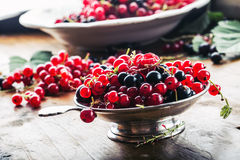 Red and black currants. red currant jam with fresh berry Royalty Free Stock Images