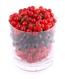 Red and black currants. In transparent glass isolated on white background Stock Photo