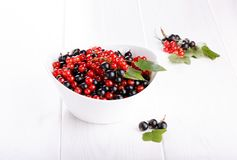 Red and black currants in a white bowl royalty free stock photo