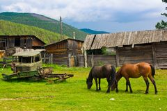 A red and black horses graze on a green meadow next to old ruined wooden houses and a broken car. Animals/Wildlife, building stock photos