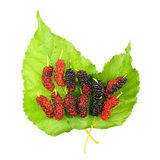 Red and black mulberry on leaf isolated Stock Photos